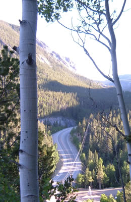 View of a high mountain pass surrounded by aspen and pine trees.